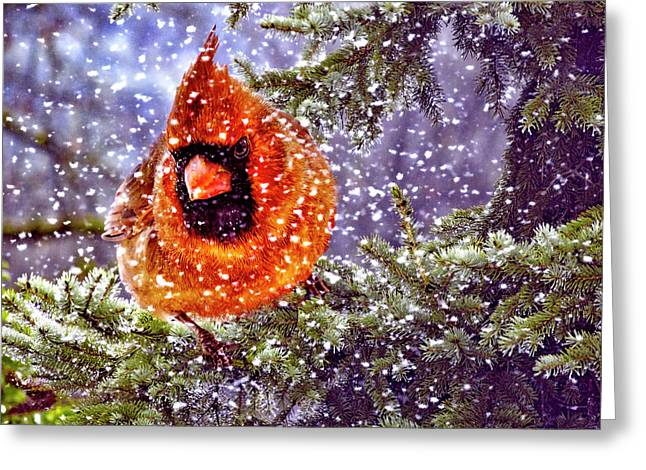 Greeting Card featuring the photograph Enough Of This White Stuff by Diane Schuster