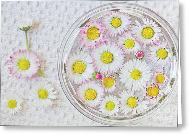 Enslish Daisies In A Jar Greeting Card by Masako Metz