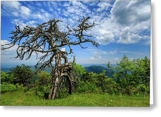 Ent At The Top Of The Hill - Color Greeting Card