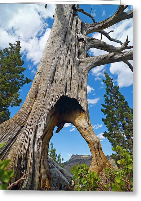 Ent Tree On The Move Greeting Card