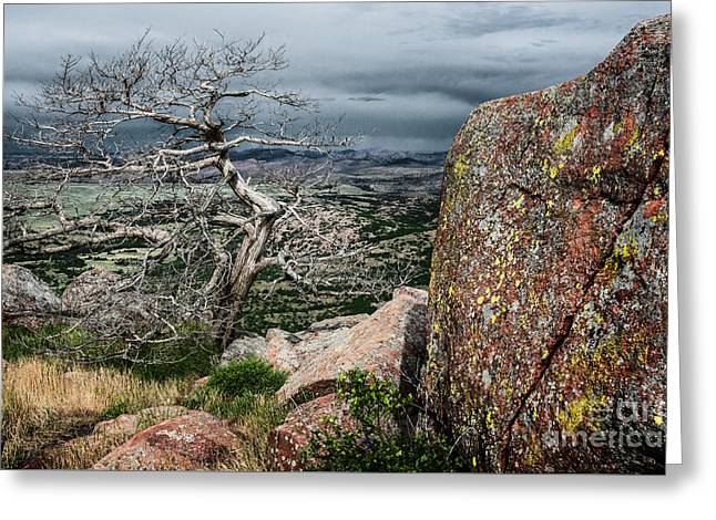 Entangled Tree On Mt. Scott Greeting Card by Tamyra Ayles