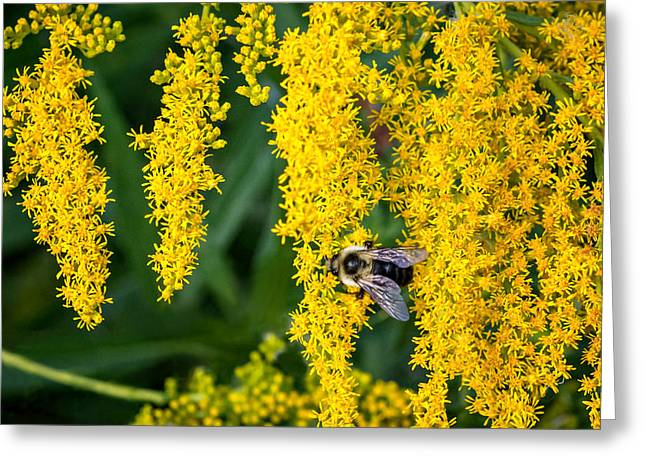 Enticing Yellow Greeting Card by Steve Harrington
