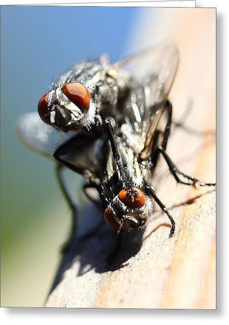 Entomologists Discover Why People Want To Be A Fly On The Wall Greeting Card by Wingsdomain Art and Photography