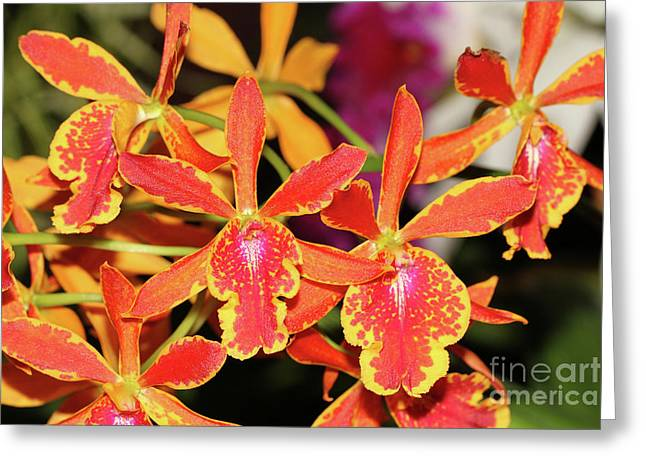 Epicatanthe Volcano Trick Paradise Orchids Greeting Card