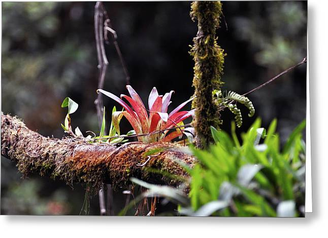 Epiphytic Plants Greeting Card by Wes Hanson