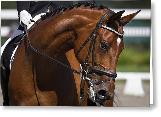 Equestrian At Work Greeting Card by Wes and Dotty Weber