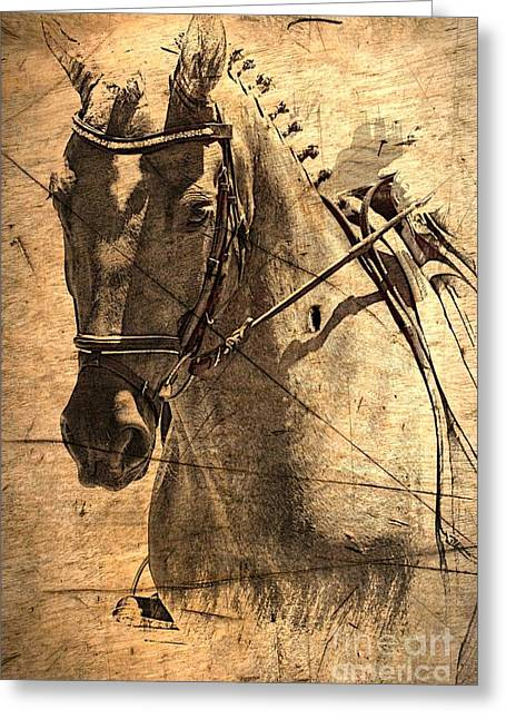 Equestrian Greeting Card by Clare Bevan