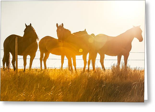 Equine Glow Greeting Card by Todd Klassy