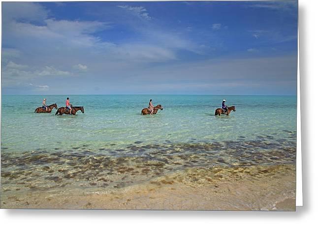 Equine Splendor  Greeting Card