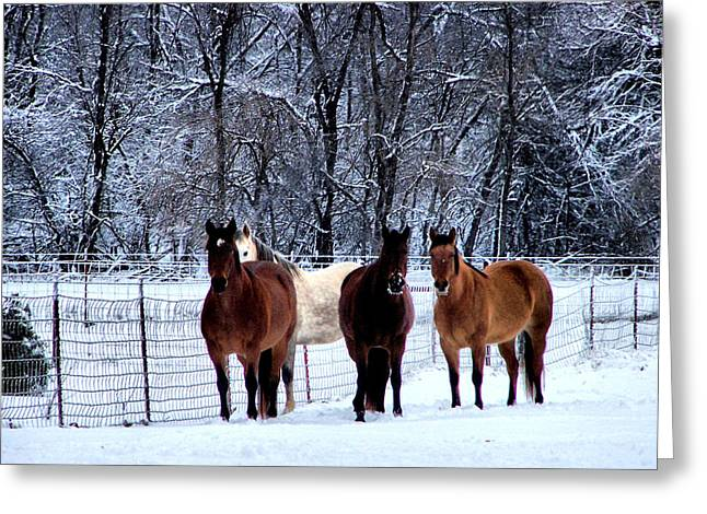 Equine Winter Greeting Card by Karen M Scovill