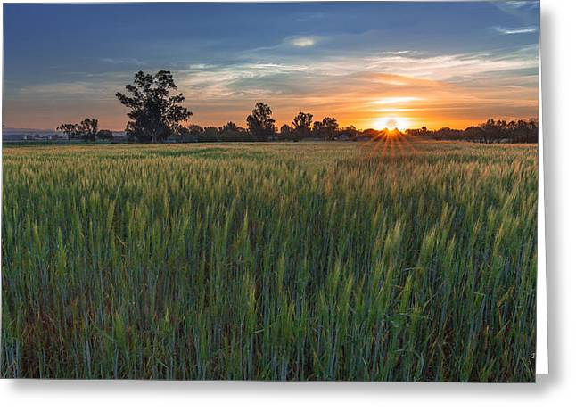 Equinox-first Sunrise Of Spring Greeting Card