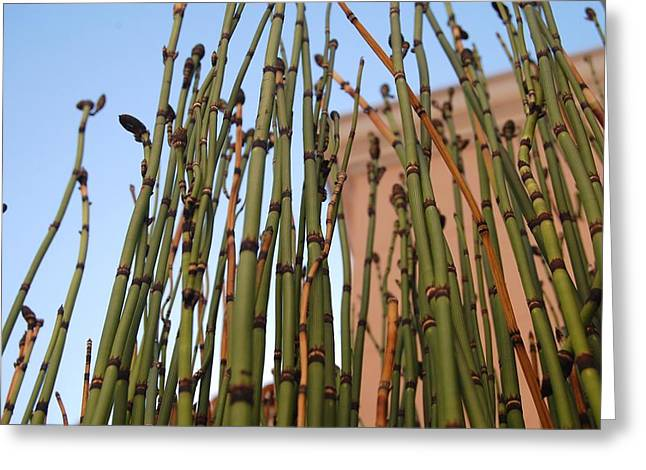 Equisetum Greeting Card by Jean Booth