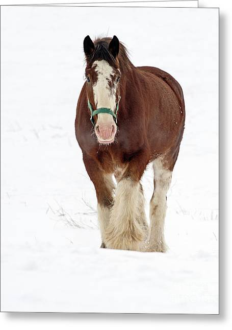 Greeting Card featuring the photograph Equus Caballus.. by Nina Stavlund