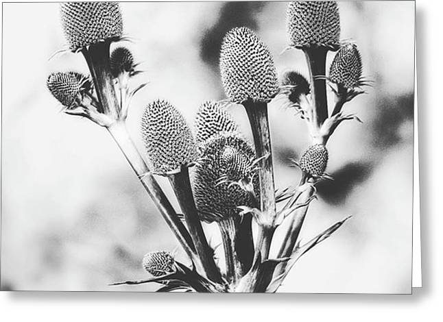 Eryngium #flower #flowers Greeting Card by John Edwards