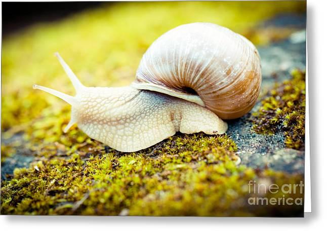 Escargot Artmif.lv Greeting Card