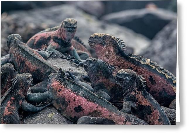 Espanola Marine Iguanas Greeting Card by Harry Strharsky