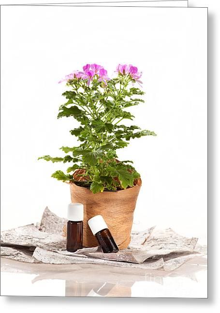Essential Oil Rose Geranium Greeting Card