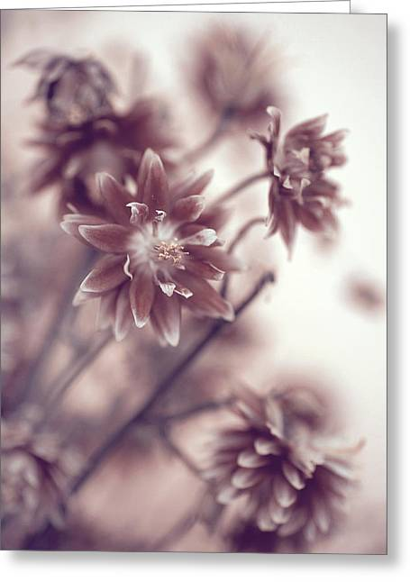 Greeting Card featuring the photograph Eternal Flower Dreams  by Jenny Rainbow