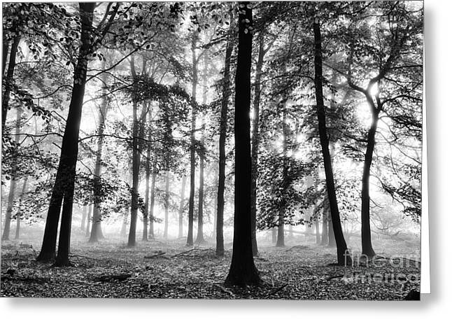 Ethereal Beech Wood Greeting Card by Tim Gainey