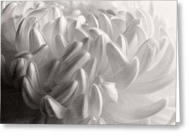 Ethereal Chrysanthemum Greeting Card