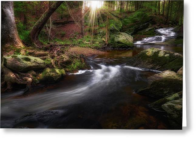 Greeting Card featuring the photograph Ethereal Morning 2017 by Bill Wakeley