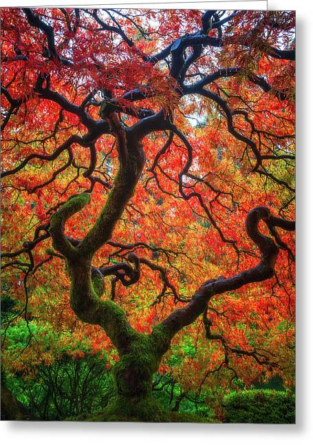 Ethereal Tree Alive Greeting Card by Darren White