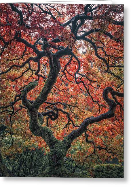 Ethereal Tree Greeting Card by Darren White