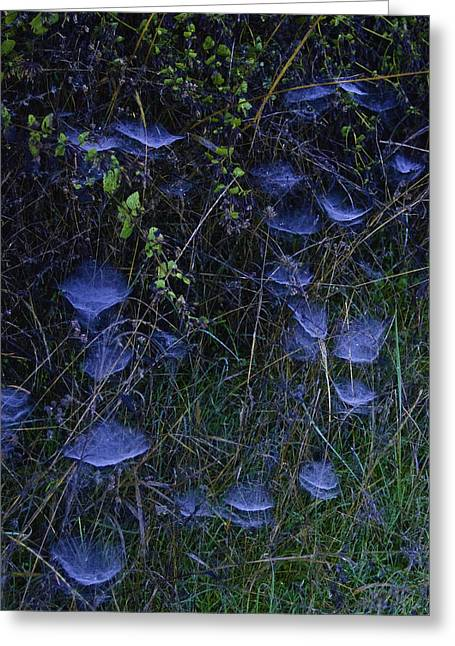 Greeting Card featuring the photograph Spider Webs by Sherri Meyer