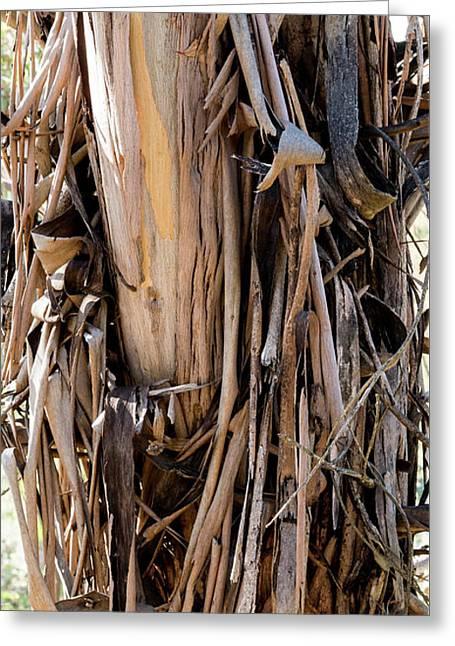Eucalyptus Bark - Australia Greeting Card by Steven Ralser