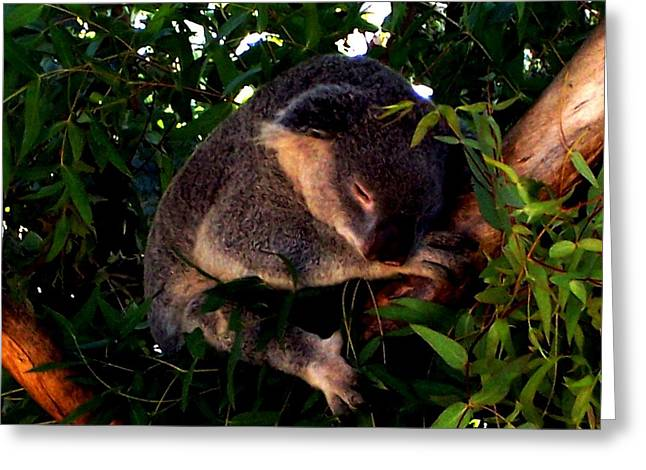 Eucalyptus Daze Greeting Card by Douglas Kriezel