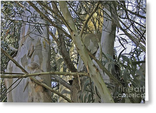 Eucalyptus Study Greeting Card