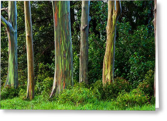 Eucalyptus Trees Greeting Card