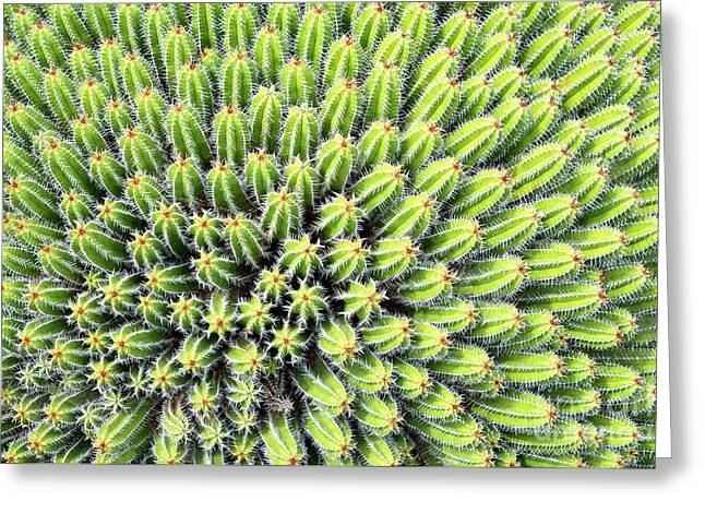 Euphorbia Greeting Card by Delphimages Photo Creations