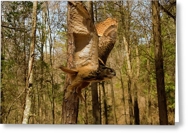 Eurasian Eagle Owl In Flight Greeting Card by Chris Flees