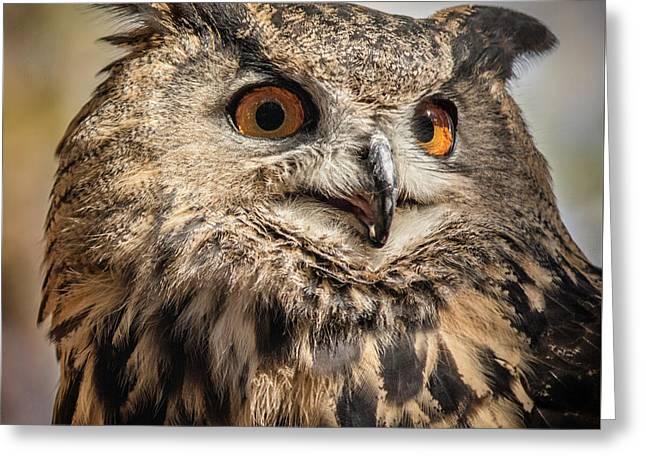 Eurasian Eagle Owl Portrait Greeting Card by Teresa Wilson