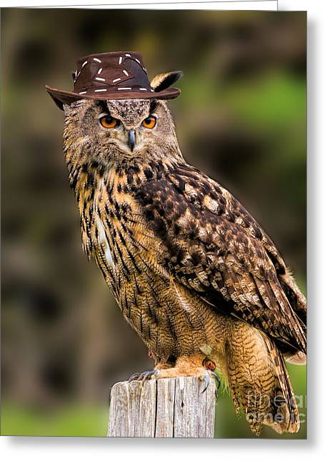 Eurasian Eagle Owl With A Cowboy Hat Greeting Card