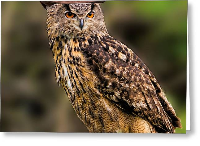 Eurasian Eagle Owl With A Cowboy Hat Greeting Card by Les Palenik