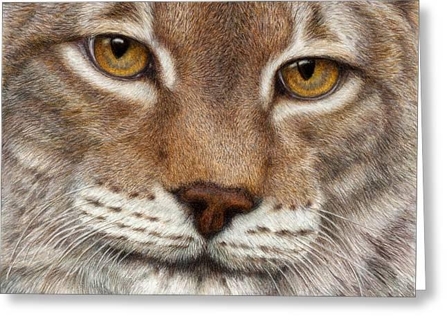 Eurasian Lynx Greeting Card by Pat Erickson