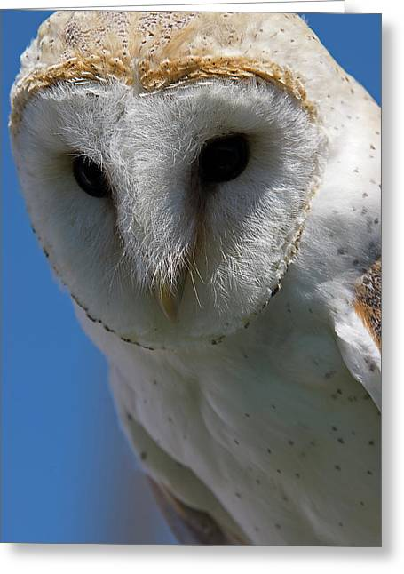 Greeting Card featuring the photograph European Barn Owl by JT Lewis