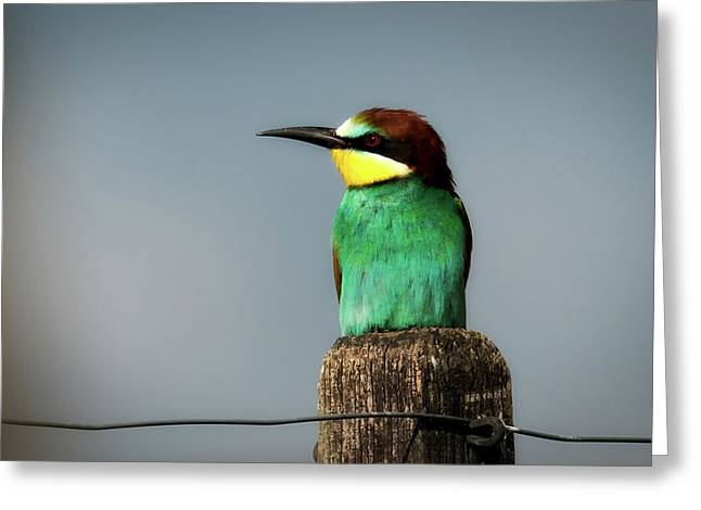Greeting Card featuring the photograph European Bee Eater by Wolfgang Vogt