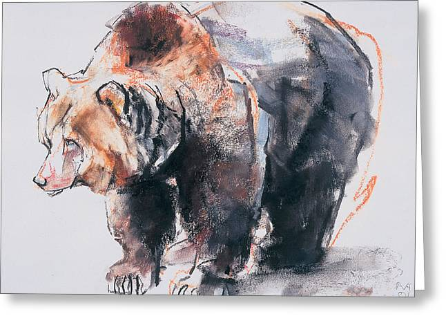 European Brown Bear Greeting Card by Mark Adlington