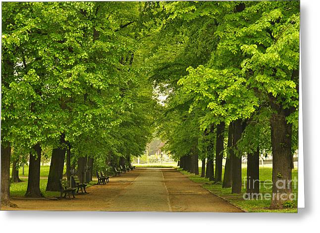European City Park With Benches In Spring Time Greeting Card by Caio Caldas