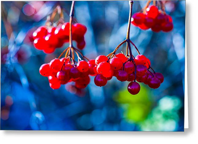 Greeting Card featuring the photograph European Cranberry Berries by Alexander Senin