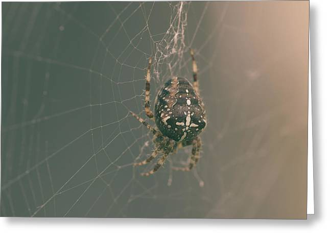 European Garden Spider B Greeting Card