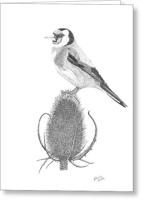 European Goldfinch Greeting Card by Patricia Hiltz