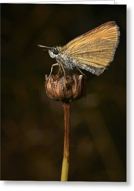 Greeting Card featuring the photograph European Skipper by Jouko Lehto