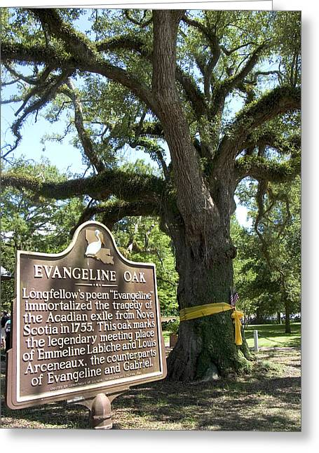 Evangeline Oak In St. Martinsville, Louisiana Greeting Card by Carl Purcell