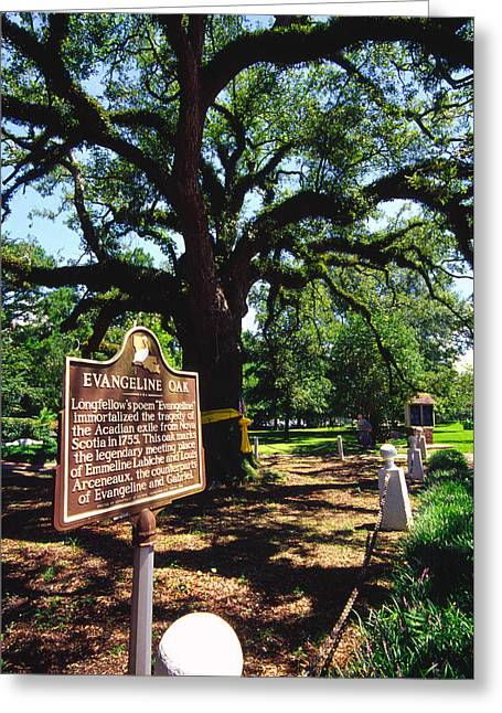 Acadian Greeting Cards - Evangeline Oak St Martinville Louisiana Greeting Card by Thomas R Fletcher
