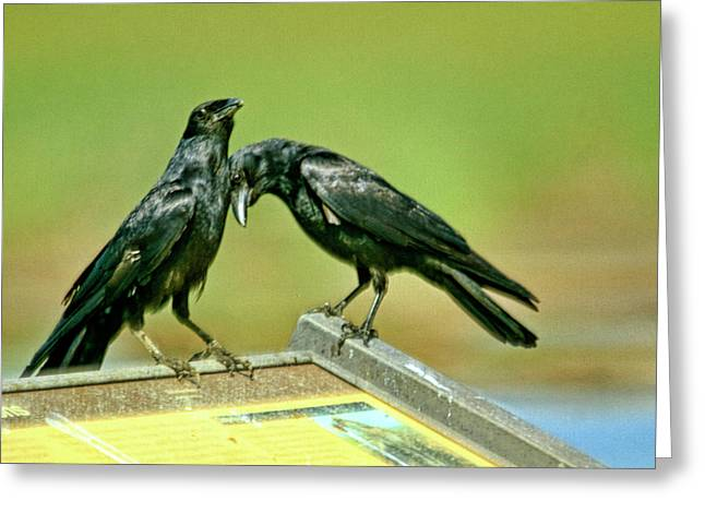 Even Crows Need Some Lovin Greeting Card