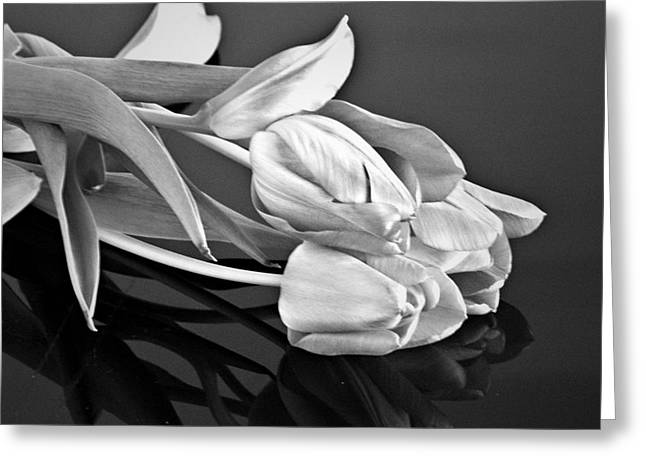 Even Tulips Are Beautiful In Black And White Greeting Card by Sherry Hallemeier